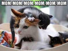 Awesome... Cats And Kittens Meowing xoxo
