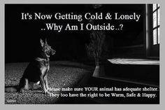 #ANIMALCRUELTY