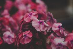 Close Up Photo of Red Petaled Flowers  Free Stock Photo