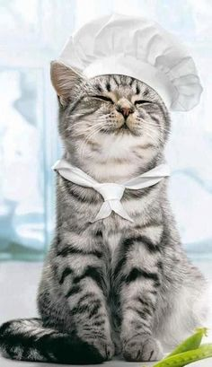 The chef #cute #kitten