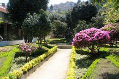 Quinta da Boucinha - Oliveira do Douro