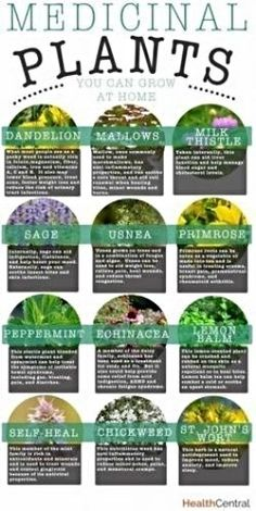 Grow Your Own Medicinal Herbs - American Preppers Network