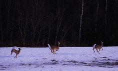 A Deer by Noah Rosen on 500px