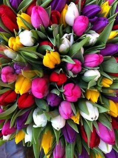 Tulips!!! My favorite flowers!!