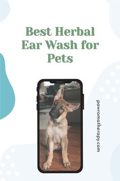 Herbal Ear Wash for Dogs and Cats. Natural, handmade ear cleaner created by holistic veterinarian, Dr. Deneen Fasano. All natural ingredients using herbs and essential oils. Dog Ear Wash, Dog Ear Cleaner, Organic Witch Hazel, Dogs Ears Infection, Ear Cleaning, Organic Essential Oils, Dog Photos, Dog Stuff, Pet Care