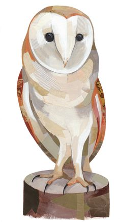 Barn Owl - Beautiful illustration By Darren Booth