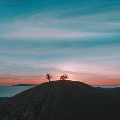 Ventura life. Two Trees by @_8o5_ #venturalife #twotrees #downtownventura #ventura #californialivin