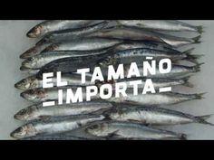 El tamaño importa con Miguel Ángel Silvestre - Oceana Europe
