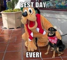 Dogs at Disney...every bit as excited as kids!