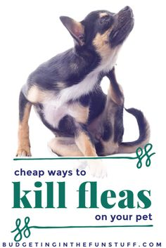how to kill fleas with dawn vinegar the o 39 jays pets and dishes. Black Bedroom Furniture Sets. Home Design Ideas