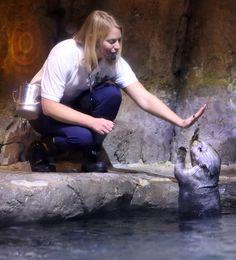 Sea otter gives her keeper a high five - November 20, 2015