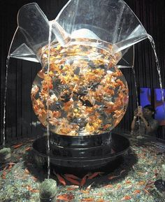 More than 1k beautiful goldfishes in a 1.5m diameter bowl!