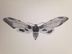 mariposa, insecto, puntillismo, diseño, blanco y negro