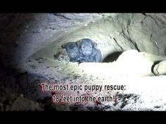 Epic puppy rescue - 18 feet into the earth!!! Dangerous Hope For Paws rescue! - YouTube