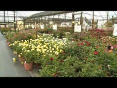 Love roses in your landscaping? Meet a Tyler, Texas farmer who grows dozens of varieties in varying colors.