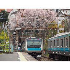 と鉄道を求めて 本命の貨物は被られました; #鉄道 #電車 #E233系 #根岸線 #桜 #さくら #OLYMPUS #OMD #EM10 by dd101murasame
