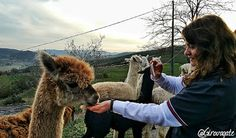 Weekend in Alta Umbria tra borghi e piatti tipici | itinerario in Valtiberina Animals, Animales, Animaux, Animal, Animais