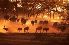 142 Fotos engraçadas de animais | Fottus