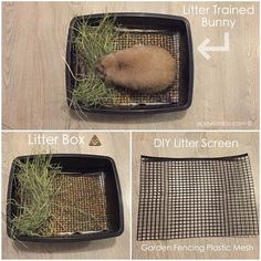 his is not necessary but some might find it useful. This is what we use and it works for us. How to make your own litter screen using Rabbit Litter Box, Rabbit Toys, Pet Rabbit, House Rabbit, Litter Box Training Rabbits, Diy Litter Box, Pet Bunny Rabbits, Dwarf Bunnies, Bunny Cages