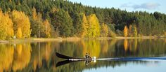 Autumn colours galore – experience Lapland – Christine Atkinson – Join in the world of pin Autumn Leaf Color, Autumn Colours, Tourist Board, Natural Phenomena, Tourism, National Parks, Scenery, Explore, Age Photo