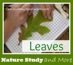 Area and Perimeter with Leaves | Our Journey Westward