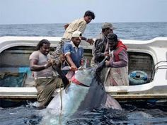 Giant #marlin! Go #fishing at the link.crazy ass refugees