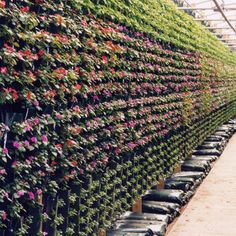 This Al's Flower Pouch production wall is a great way to utilize growing space.   #alsflowerpouch #afp #amahort #amasolutions #verticalgarden #verticalgardening #gardenideas #gardeninspiration #wallbag #flowerbag #plants #greenthumb #myapartmentbalcony #redecormyhome