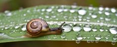 Since spring, frequent rains have been keeping things on the soggy side and causing a myriad of problems in the garden. One of those problems is the damage caused by snails and slugs. Gardeners keep asking me how to control...