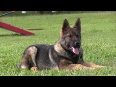 German Shepherd Training Tips - YouTube