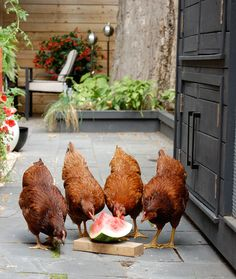 I love chickens...they make me smile : )