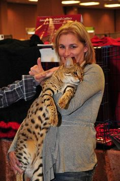 Tallest cat  Trouble (shown here with owner Debby Maraspini) holds the world record for tallest domestic cat, measuring 19 inches long from shoulder to toe. A Savannah cat is a hybrid domestic cat breed that's a cross between a domestic cat and a serval, a wild cat native to Africa. Trouble replaced the previous record-holder in November 2011.