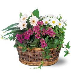 Order Traditional European Garden Basket - from Plantation Florist-Floral Promotions, Inc., your local Plantation florist. For fresh and fast flower delivery throughout Plantation, FL area. Flower Delivery Service, Same Day Flower Delivery, Fast Flowers, Big Flowers, European Garden, Garden Basket, Anniversary Flowers, Beautiful Bouquet Of Flowers, Order Flowers Online