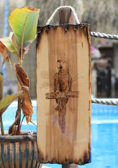 Pyrography Wood Burned Parrot on a Large by RozEmazingDesigns
