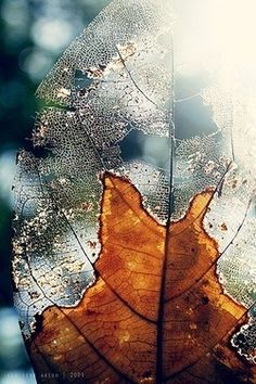 ~ Partial skeletal leaf ~