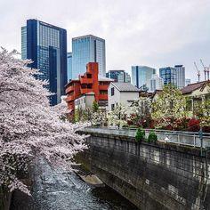 Les cerisiers de la rivière Kanda-Gawa étaient tous en fleurs à Ochiai (à #Tokyo) et ses environs.  Et vous ? Quel est votre spot fétiche ?