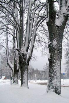 Nature of Latvia. Winter. Sigulda, Latvia.