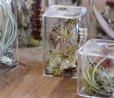Stylish Cube Aeriums To Make A Miniature Garden On A Desktop | DigsDigs