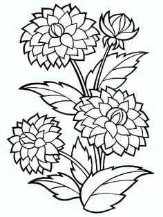Dahlia Flower Coloring Pages