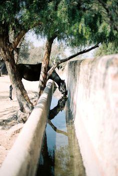 Horses Hacienda las Trancas