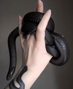 Le plus récent Photos animales Reptiles Stratégies Les Reptiles, Cute Reptiles, Reptiles And Amphibians, Pretty Snakes, Beautiful Snakes, Snake Art, Pet Snake, Snake Eyes, Pretty Animals