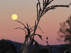 A-Mazing Harvest Moon - taken in the corn maze at  Eliada Home in Asheville, NC one halloween