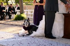We love this! The bride made her Great Dane the flower girl at her wedding. Simply presh. | A Great Love And A Great Dane via @inspiredbride