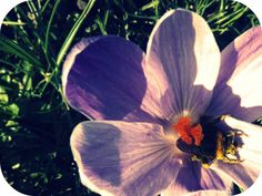 Mr Bumble Bee Waking up...