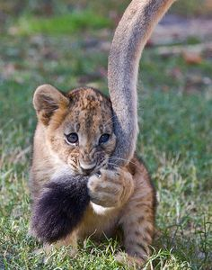 Best Toy?  Moms' tail...