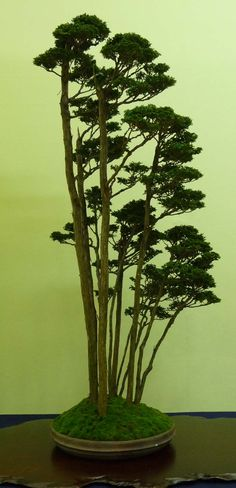 A blog about the journey of an Australian Bonsai potter to develop high quality artisanal bonsai pots.