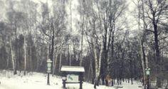 Las Bielański w zimowej scenerii