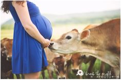 Maternity Session on Cruze Farm ~ Baby Goats, Jersey Cows, and Pretty Sunlight  #breakthemoldphoto #maternity #cows #jerseycows