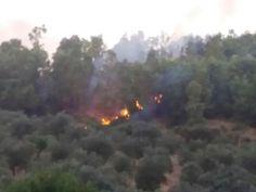 Un'altra giornata di fuoco a Cirò: sono andati in fiamme ettari di bosco di Eucalipti in zona Romanò - Sul posto sono intervenuti fino a  tarda sera, i vigili del fuoco di Cirò Marina, i quali hanno impedito alle fiamme di distruggere un limitrofo uliveto  - http://www.ilcirotano.it/2017/07/02/unaltra-giornata-di-fuoco-a-ciro-sono-andati-in-fiamme-ettari-di-bosco-di-eucalipti-in-zona-romano/