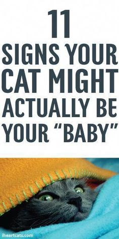 """Cat Care Health 11 Signs Your Cat Might Actually Be Your """"Baby"""" Crazy Cat Lady, Crazy Cats, Cat Info, Cat Care Tips, Cat Behavior, Tier Fotos, All About Cats, Cat Facts, Cat Health"""