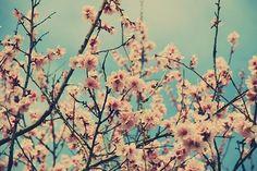 #nature #pastel #flower #paradise
